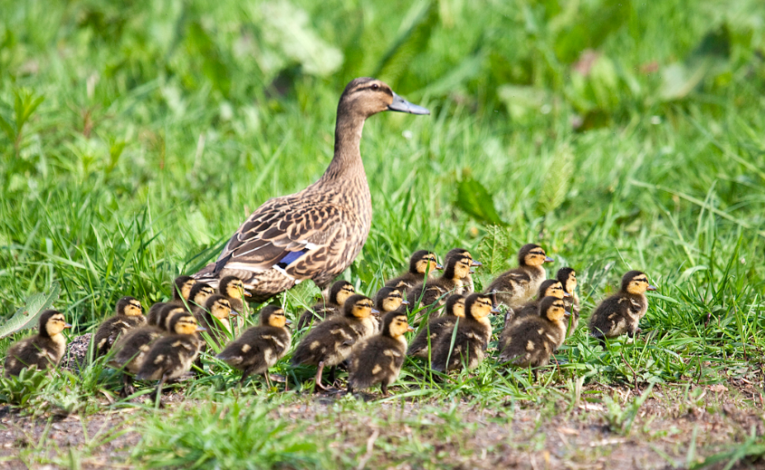 Good Parenting - Species Crossing Normality